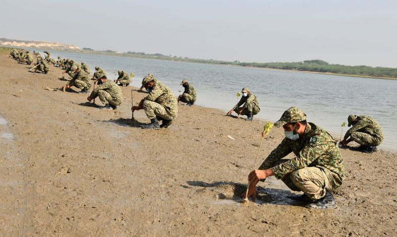 Pakistan Navy launches mangrove plantation campaign