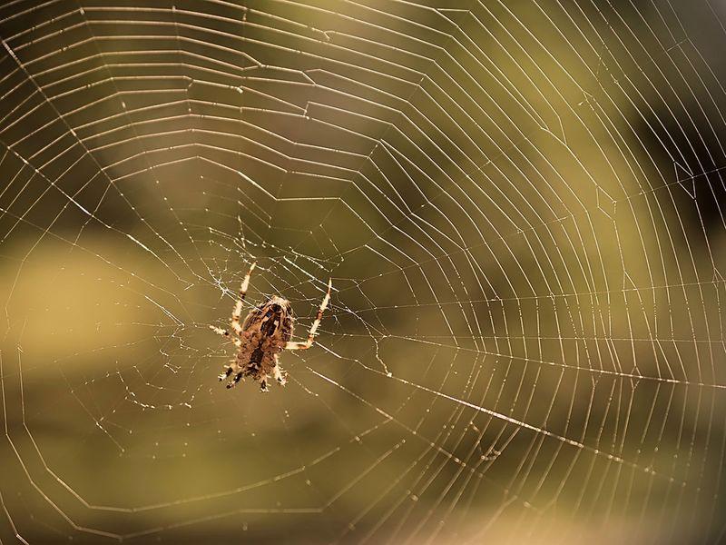 MIT scientists create music from spider webs