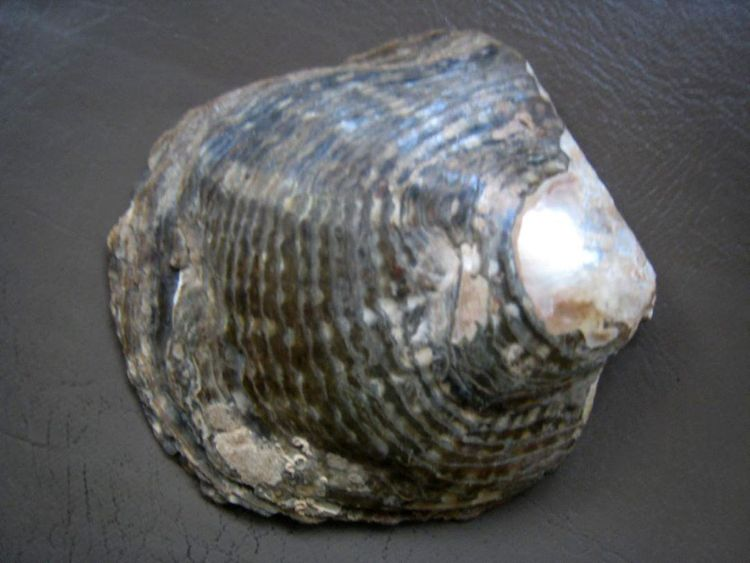USE ONLY FOR DEEPAK BHATIA STORY_The exterior shell of an oyster