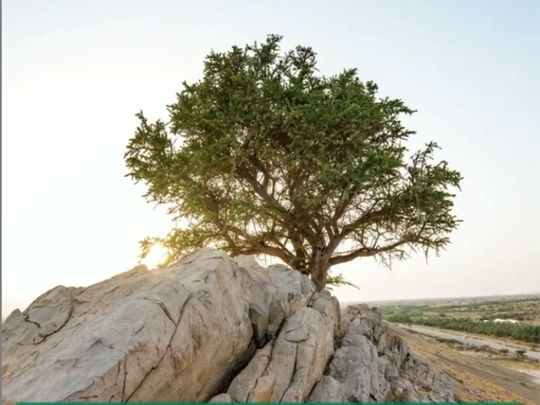 AD-rare-tree-1618817548144