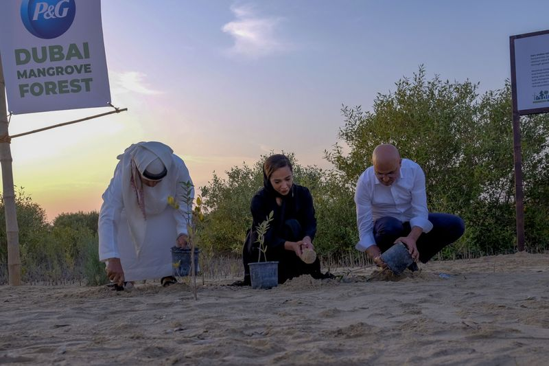 Video: New mangrove forest sprouts in Dubai