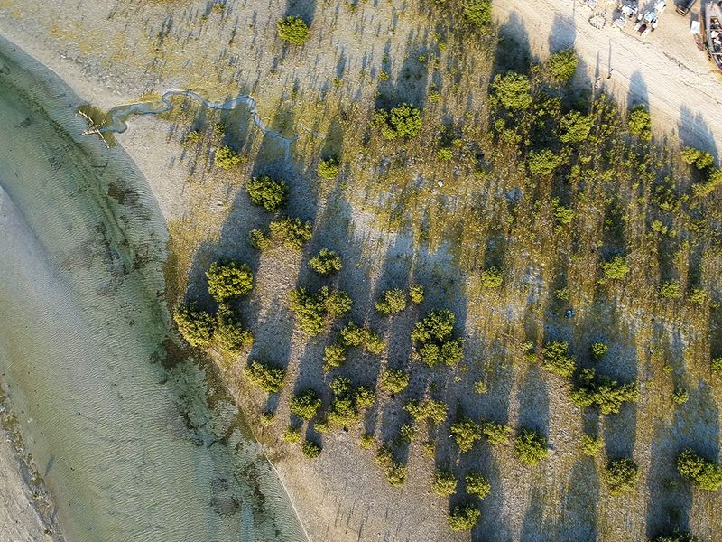 Look: A stunning new mangrove forest in Dubai