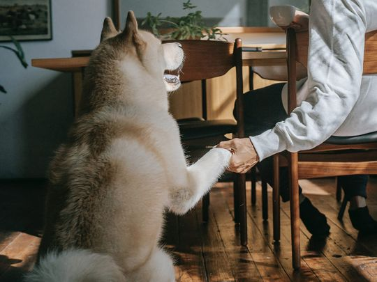 pet-owner-with-dog-at-the-coffee-table