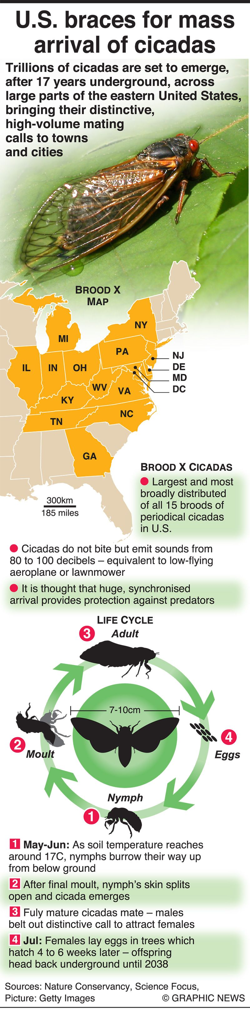 Infographic: US braces for mass arrival of cicadas