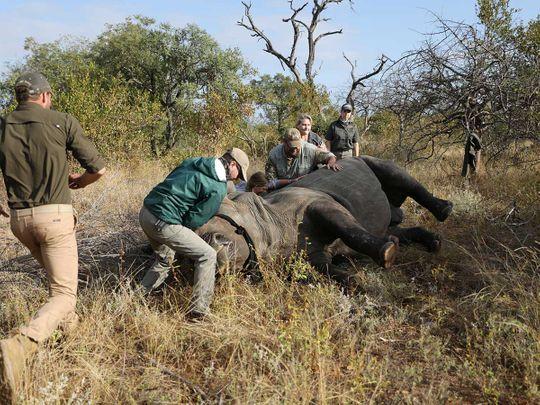 Africa vets rhino poacher