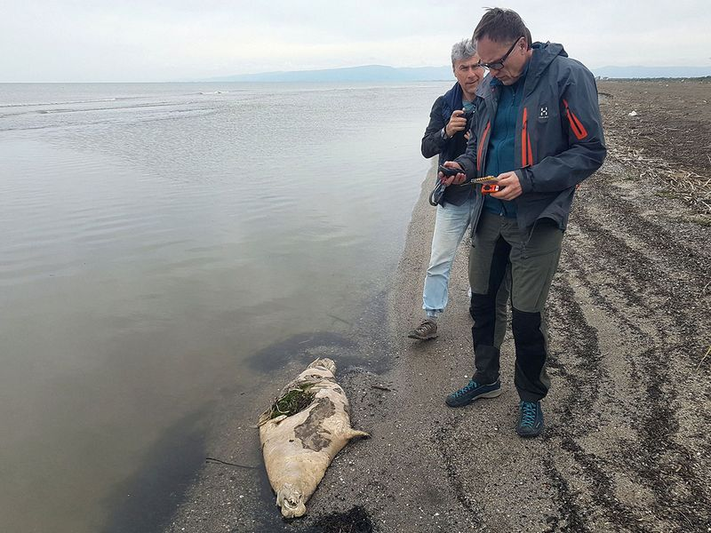 Some 170 endangered seals found dead on Russia's Caspian coast