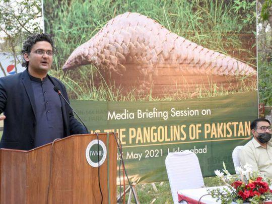 Senator Faisal Javed Khan pangolin