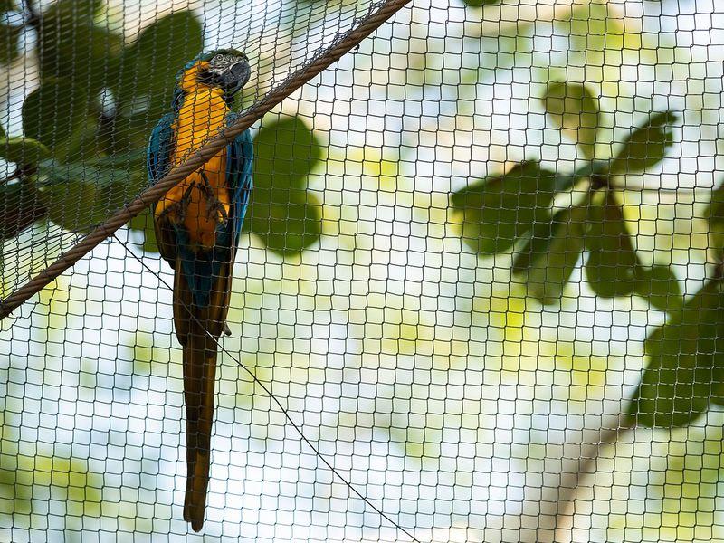 Brazil Rio Macaw Love gallery