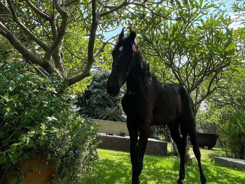 Video: MS Dhoni brings home a stallion, names him Chetak