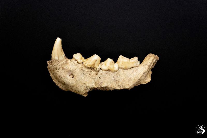 Copy of Italy_Neanderthals_51282.jpg-c70c6-1620556062084