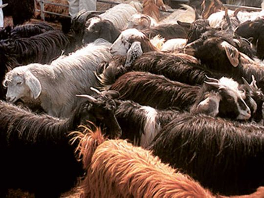 Sheep slaughter house abattoir