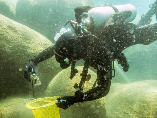 A scuba diver beneath the surface of Lake Tahoe,