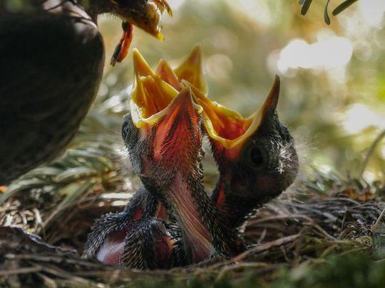 Bird nest eggs feeding