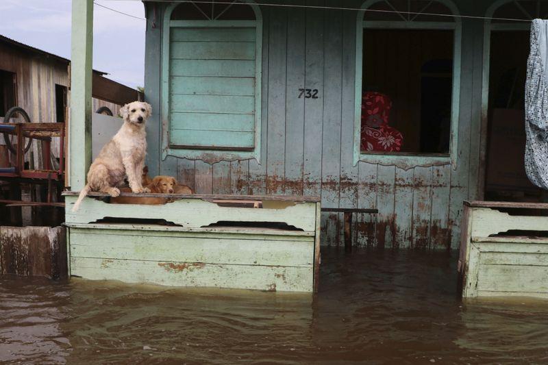 Copy of APTOPIX_Brazil_Amazon_Floods_07807.jpg-12978-1621076822575