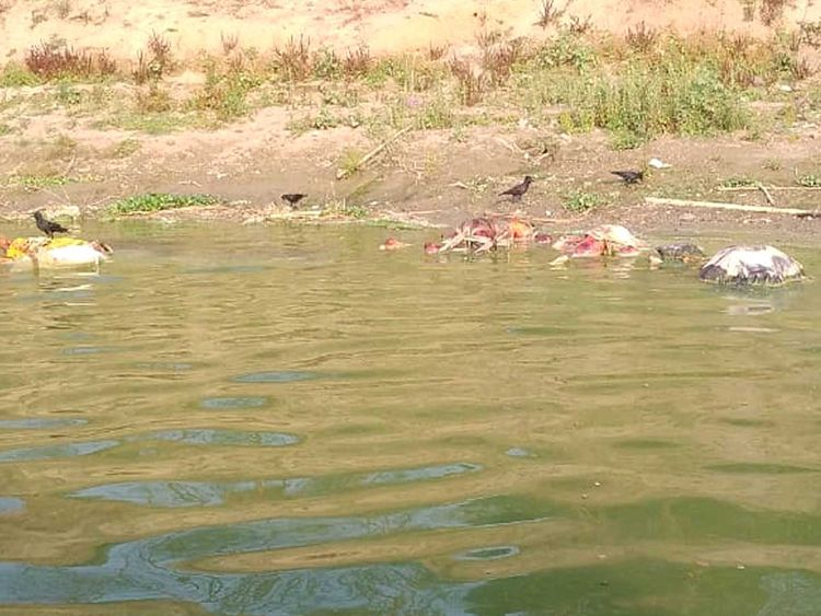 Floating corpses India