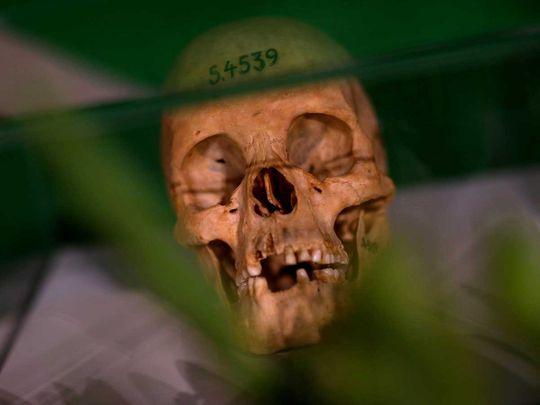 Skull namibia germany Herero Nama ethnic