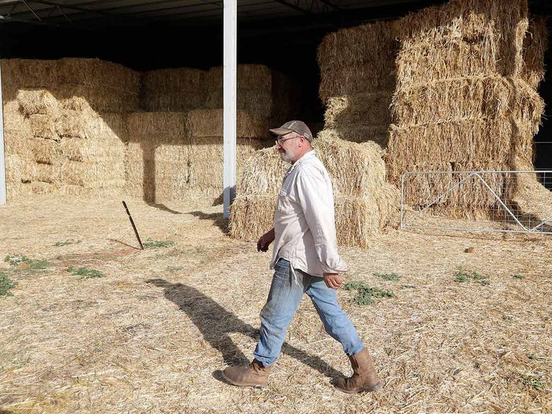 Bruce Barnes walks past stored hay infested with mice