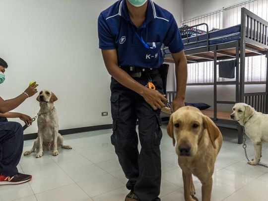 Thailand covid dogs