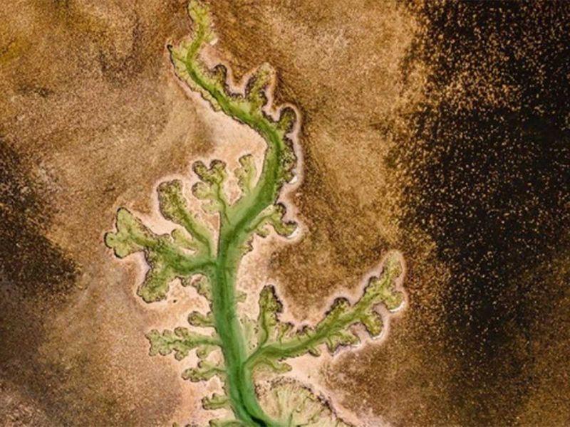 Plant Lake in Abu Dhabi