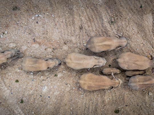 Copy of China_Wandering_Elephants_97161.jpg-621a5-1622896751186
