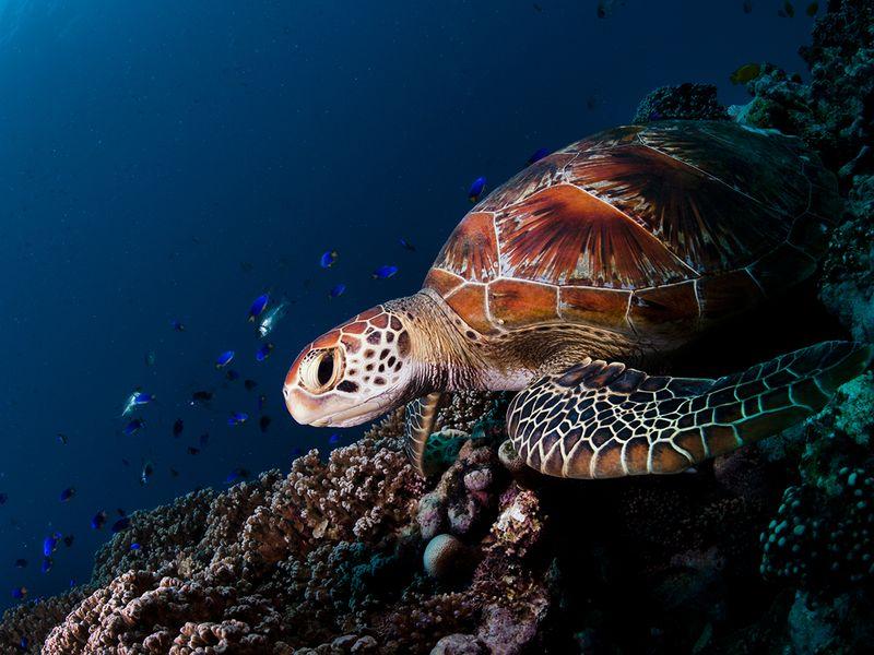 world ocean day expo 2020