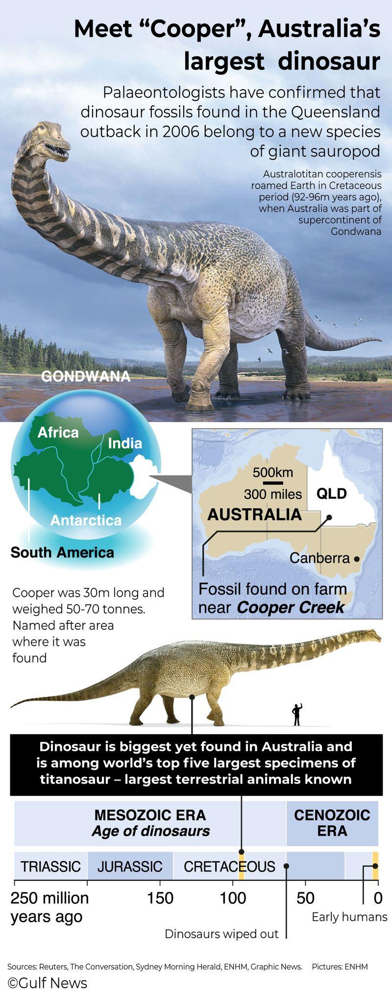 Meet 'Cooper', Australia's largest dinosaur