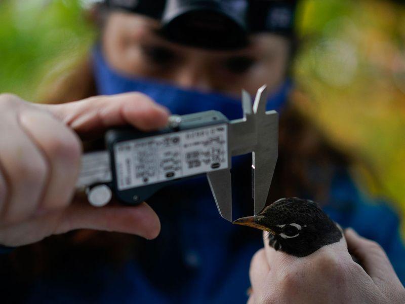 Bird migration gallery