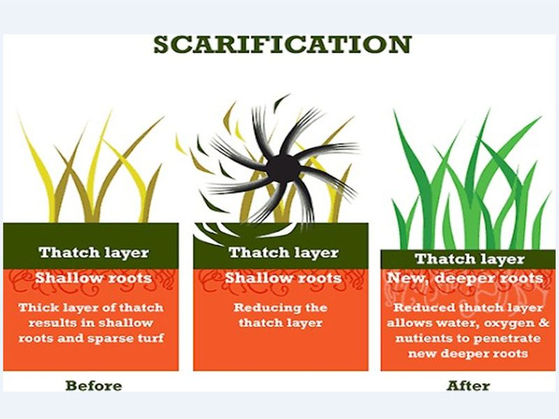 Scarification allows grass to take deeper roots