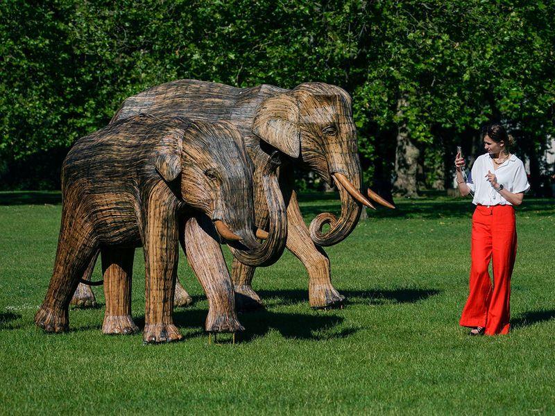 Britain_Elephants_Exhibition_07749