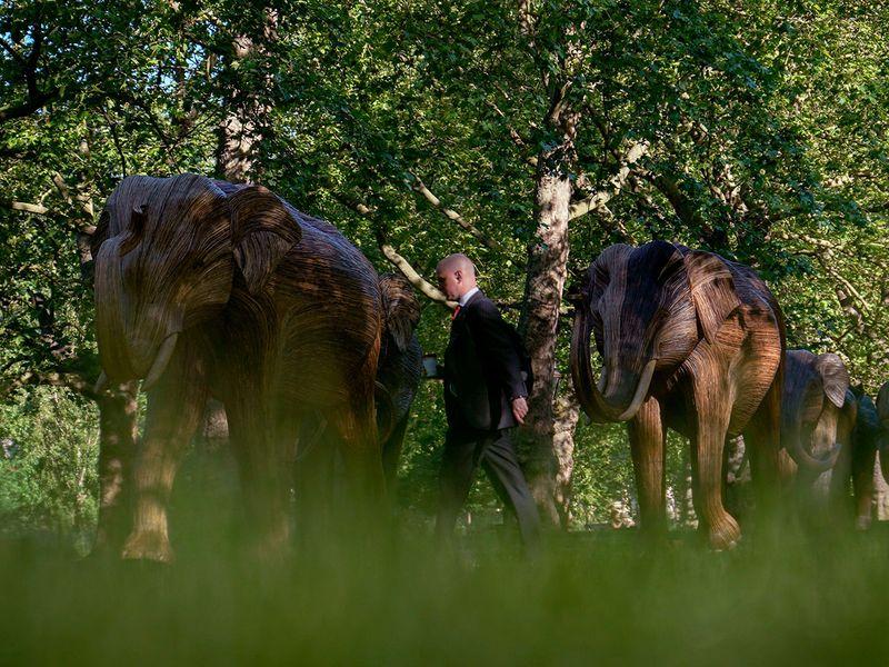 Britain_Elephants_Exhibition_22142