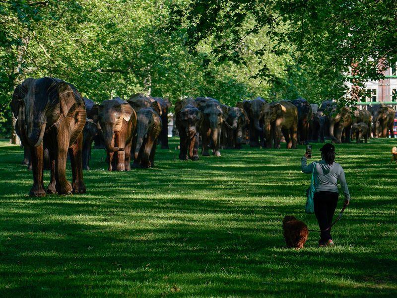 Britain_Elephants_Exhibition_33513