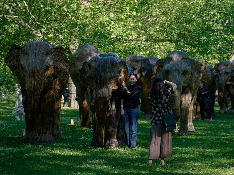Britain_Elephants_Exhibition_90765