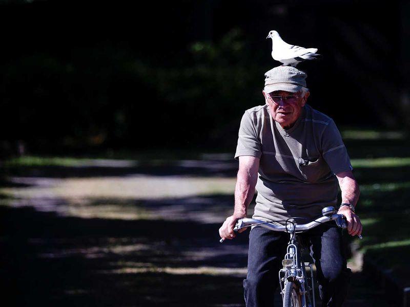 Pigeon france