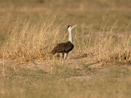 Copy of india-bird-aefde210-cdd7-11eb-8014-2f3926ca24d9 [1]-1624114457154