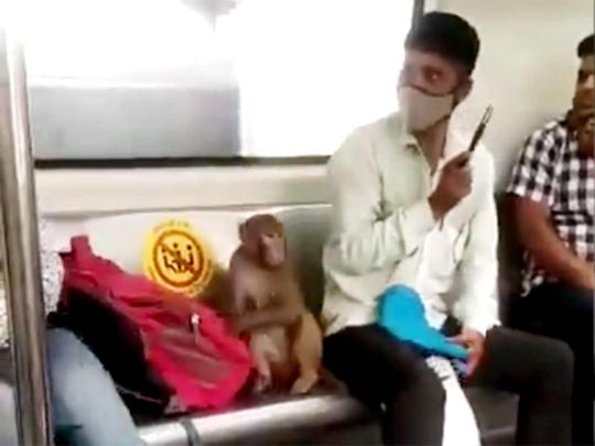 monkey travelling in the Delhi Metro