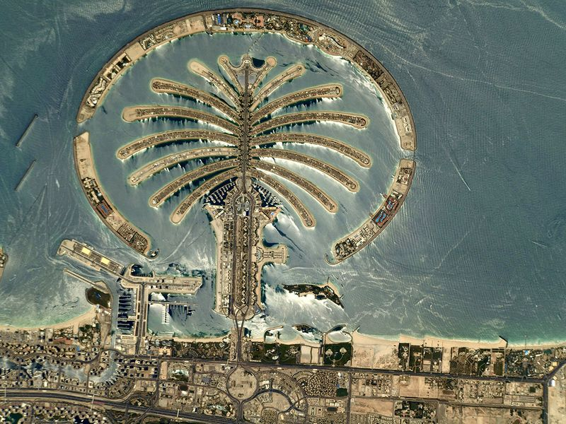 Palm aerial