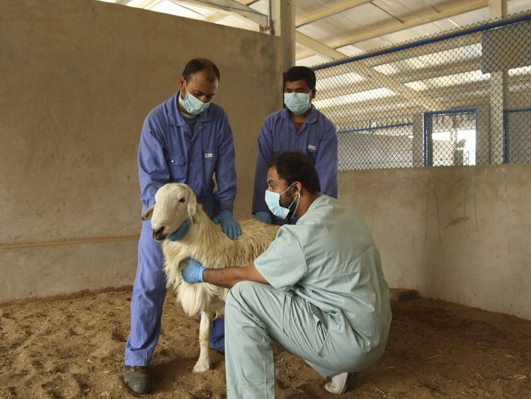 NAT_210623 Animal Vaccination1-1624628284299