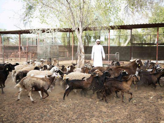 NAT_210623 Animal Vaccination7-1624628288501