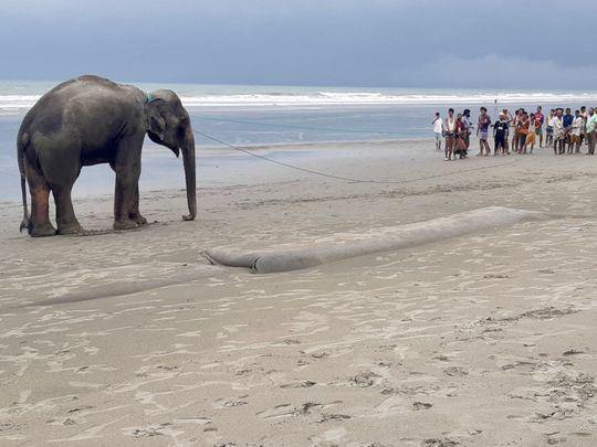 elephant-1625053120461