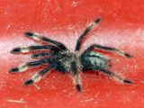 Chennai Air Customs deport foreign spiders sent by post from Poland