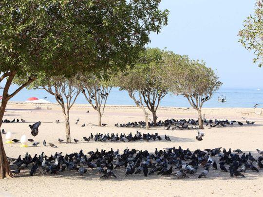 kuwait temp-1625308770574