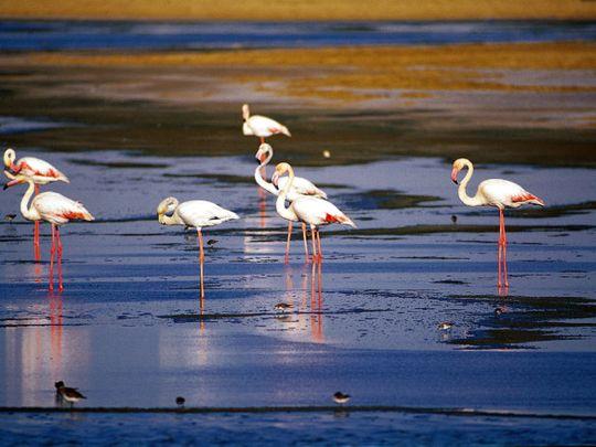 NAT Al Wathba Lake  FILE-1625645690053