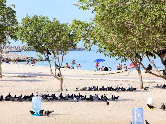 kuwait beach-1625918173526