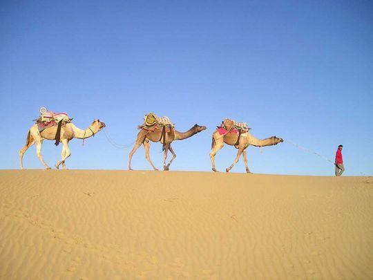 India Rajasthan camel