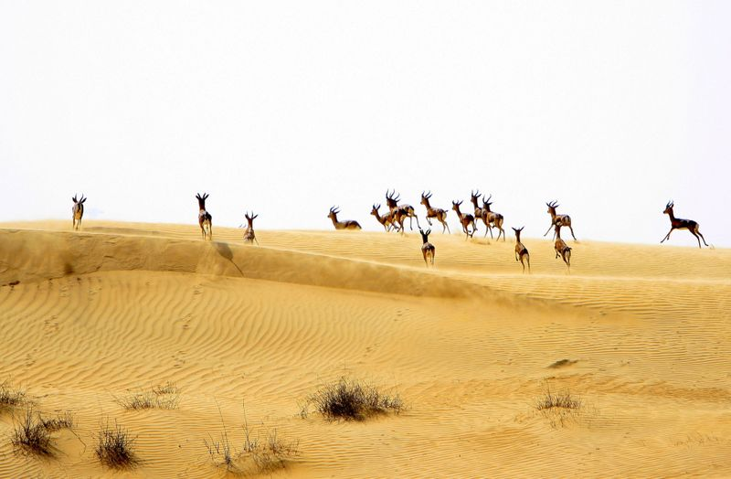 NAT 210712 Al Marmoom Reserve-1626081224550