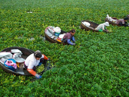 china rice-1626081765277