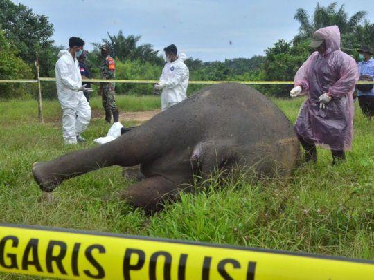 elephant-ace-1626084294843