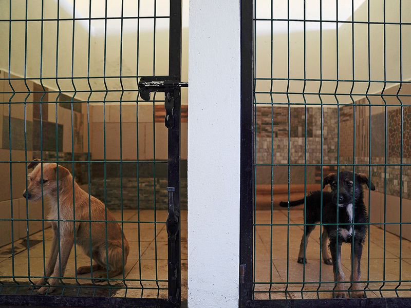 Mexico dogs gallery