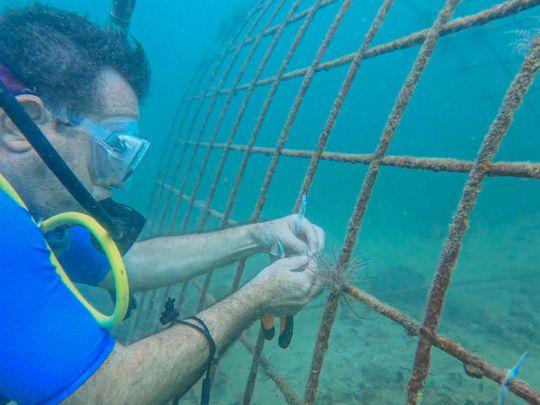 NAT 210712 Coral Reef Initiative-3-1626436062292