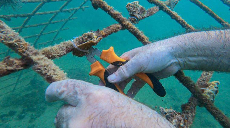 NAT 210712 Coral Reef Initiative-4-1626436065801